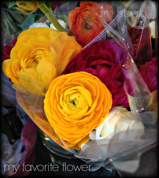 my most favorite flower ever…Ranunculus