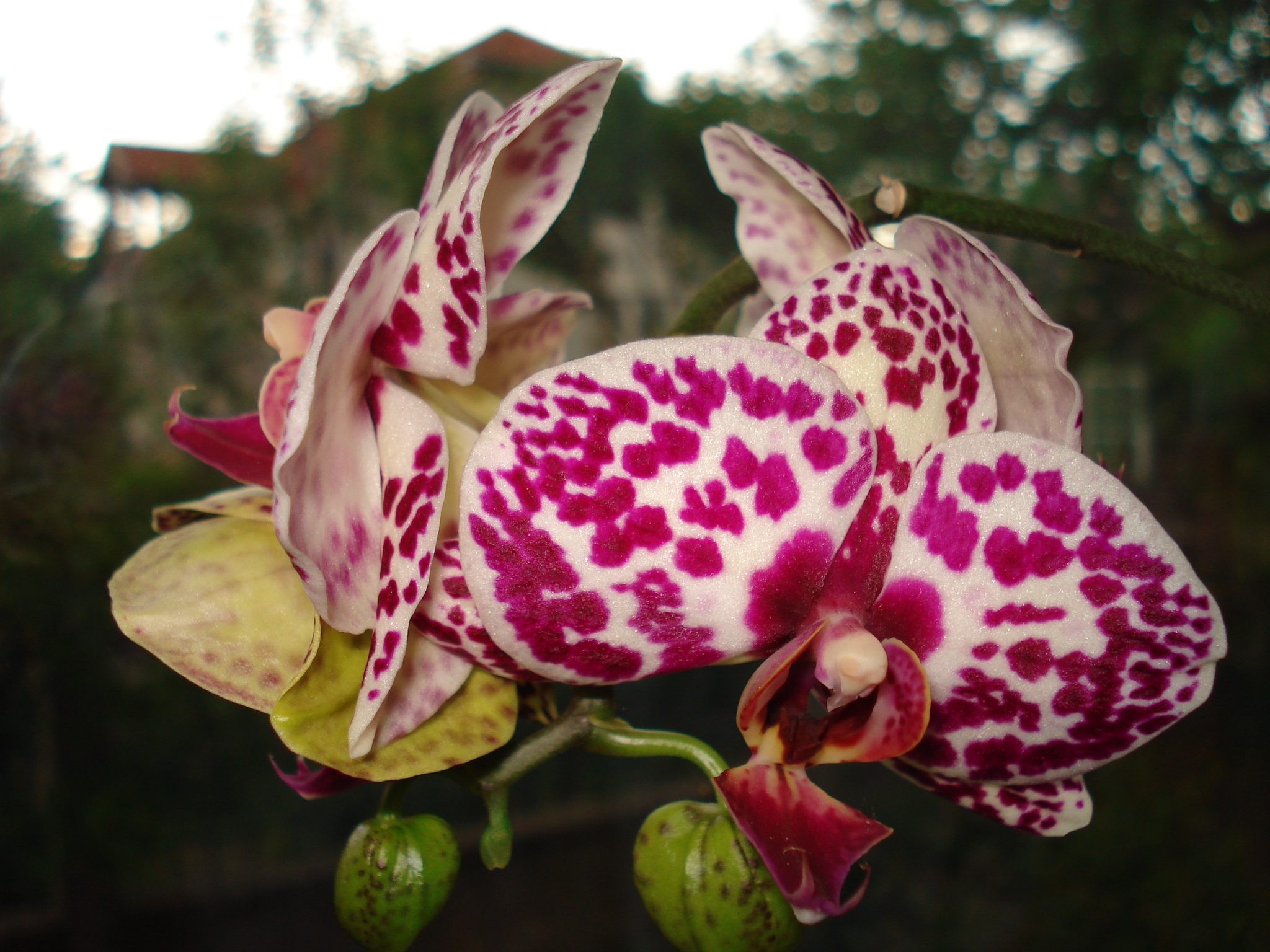 5 Interesting Facts About Orchids