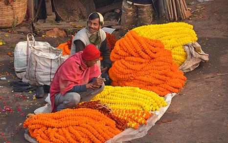 A Walk Through The Mullick Ghat Flower Bazaar